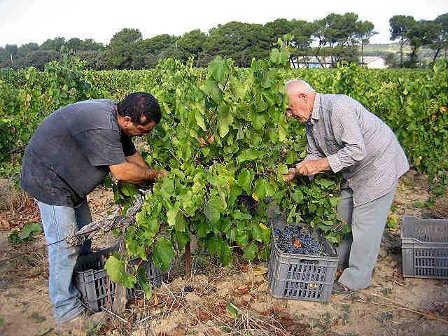 vendanges provence coteaux d'aix en provence vin