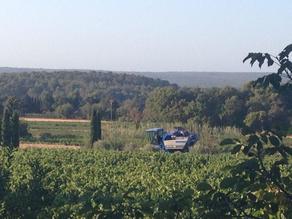domaine viticole à lambesc vendanges coteaux d'aix en provencce vin provence wine rosé