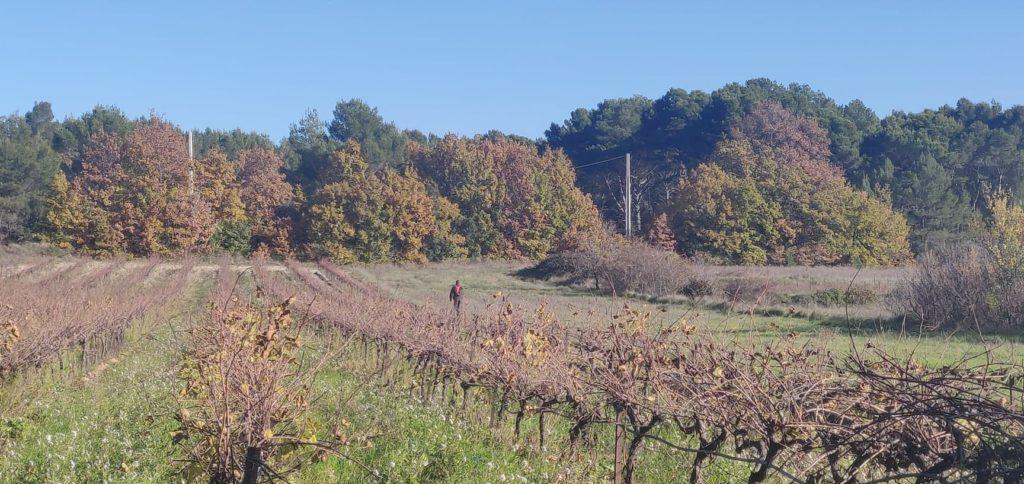 vignoble en provence lambesc domaine des oullières coteaux d'aix en provence wine red rosé pink wine bouches du rhône vigneron indépendant
