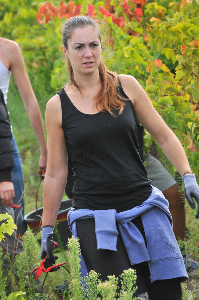 domaine viticole en provence domaine des oullières coteaux d'aix en provence wines pink rosé