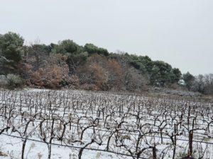 vignoble-coteaux-aix-provence-vignes-lambesc-neige